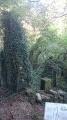 Le village d'Amange et sa forêt