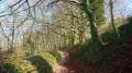 Saint-Aubin-le-Cauf - Torcy-le-Petit - la forêt d'Eawy