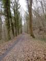 Le Bois de Montabé