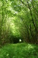 Maison Dieu Forêt du Pochon