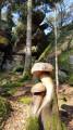Champignons sculptés