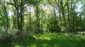 La Sologne de la forêt et des étangs autour de Crouy-sur-Cosson