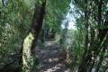 Chemin sous une allée de verdure