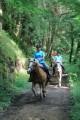 Autour de Courpière à cheval