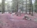 Forêt de Fougères - Les Vieux Châteaux et le Cordon des Druides
