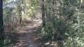 Saint Même le Tenu - La Forêt de Machecoul