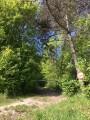 Début du sentier escarpé qui mène au site de Montaigu