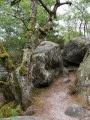 Un grand tour en Forêt de Fontainebleau