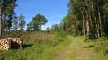 Autour des chênes à Saint-Philbert-en-Mauges