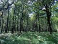 En forêt de Saint-Évroult