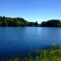 Forêt de Planoise et Etang du Martinet