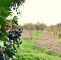 Le Bois de Louveciennes et l'Etang de Bechevet