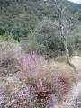 Tour du Serre du Magnon