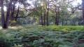 De Rambouillet à Orgerus par la forêt de Rambouillet et des Quatre Piliers