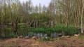 Jolie petit coin de nature au pied du terril d'Ostricourt