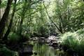 Découverte de l'Anglin, des ruines de Brosse au Moulin de Seillant