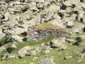 Au-dessus de Barèges, le Col de Tracens