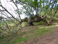 Le Chêne de Zugarramurdi et quelques grottes