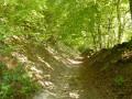 La Forêt du Hellet par les Bois de Croixdalle et de Bailleul