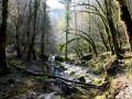 Les cascades de la Tuffière et du Raffenot