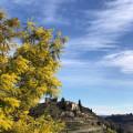 Le château d'Ucel