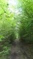 Le chemin se glisse sous les frondaisons