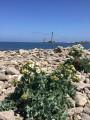 La Pointe de Barfleur