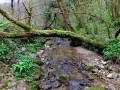 Le ruisseau des Mercureaux