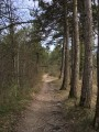 Le sentier dans la forêt de Souligny