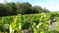 Sur le chemin des vignobles depuis Chitenay