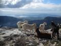 Ascension et tour du Mont Caume (804m)