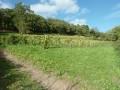 Les vignes du Mont Gareau à Saint-Suliac (35)