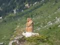Marmotte au bord du chemin