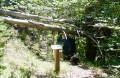 Sentier botanique de Furmeyer