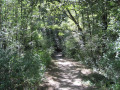 Une boucle dans les bois à Montberon