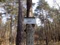 La Carte du Tendre en Forêt de Fontainebleau
