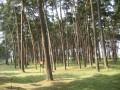 Parc mémorial de Vimy