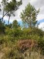 Arboretum, carrières et chevaux au Fouilloux