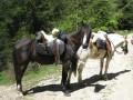 Les Hautes Chaumes : du Col du Béal à la Ramie