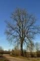 Bel arbre à proximité du pont sur la Blaise