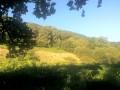 Dans le milieu du bois de Bénac sur les pentes de l'Araü