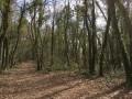 Près de la sortie de la forêt