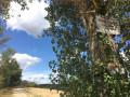 Chemin de Bagatelle