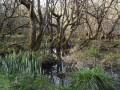 Cens, Erdre et Gesvres, trois cours d'eau nantais