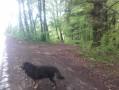 Retour en forêt