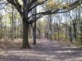 La Forêt de la Roche Turpin
