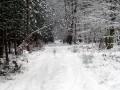 Route forestière du Loup
