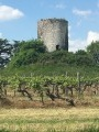 Ruine dans les vignes du Bergerac