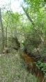 Ruisseau des Veillas