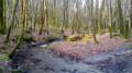 Menhirs et ruisseaux en Forêt Domaniale de Camors